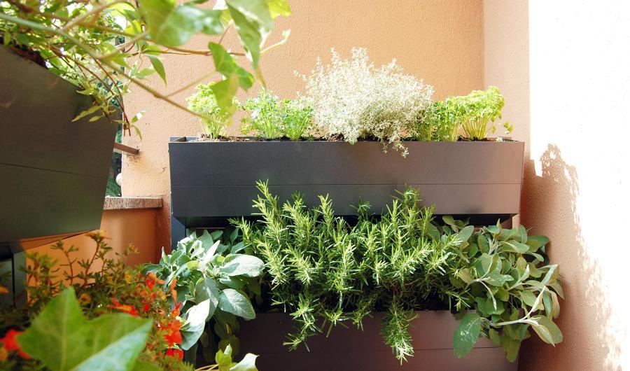 Crea il tuo giardino verticale idee giardinieri - Crea il tuo giardino ...
