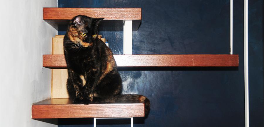 il gatto sulla scala
