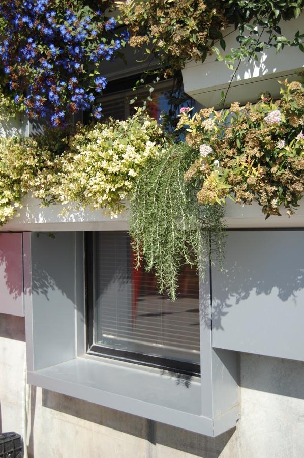 Il giardino nella finestra