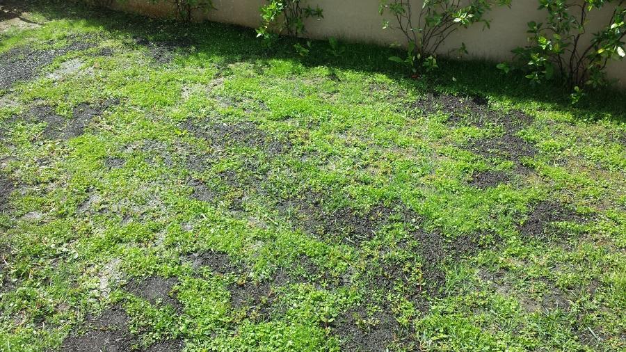 Progetto giardino dichondra e lolium perenne idee for Erba dicondra
