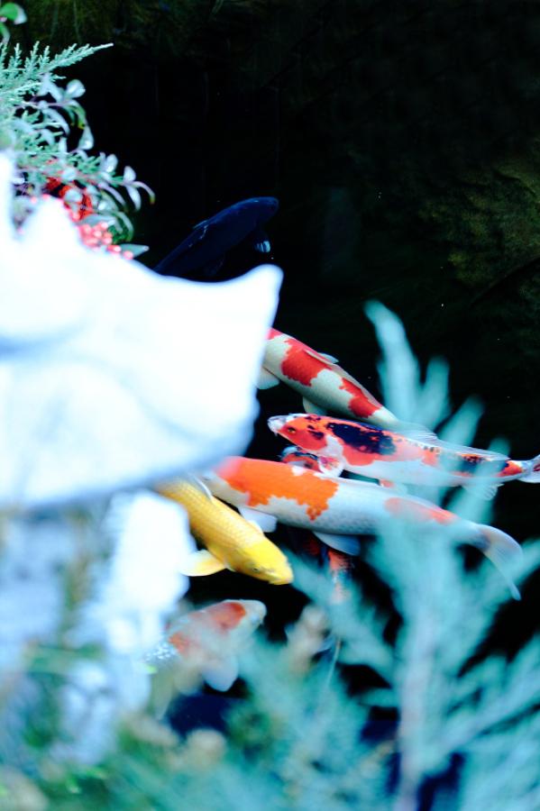 Laghetto per carpe koi stile informale giardino con for Laghetto giapponese