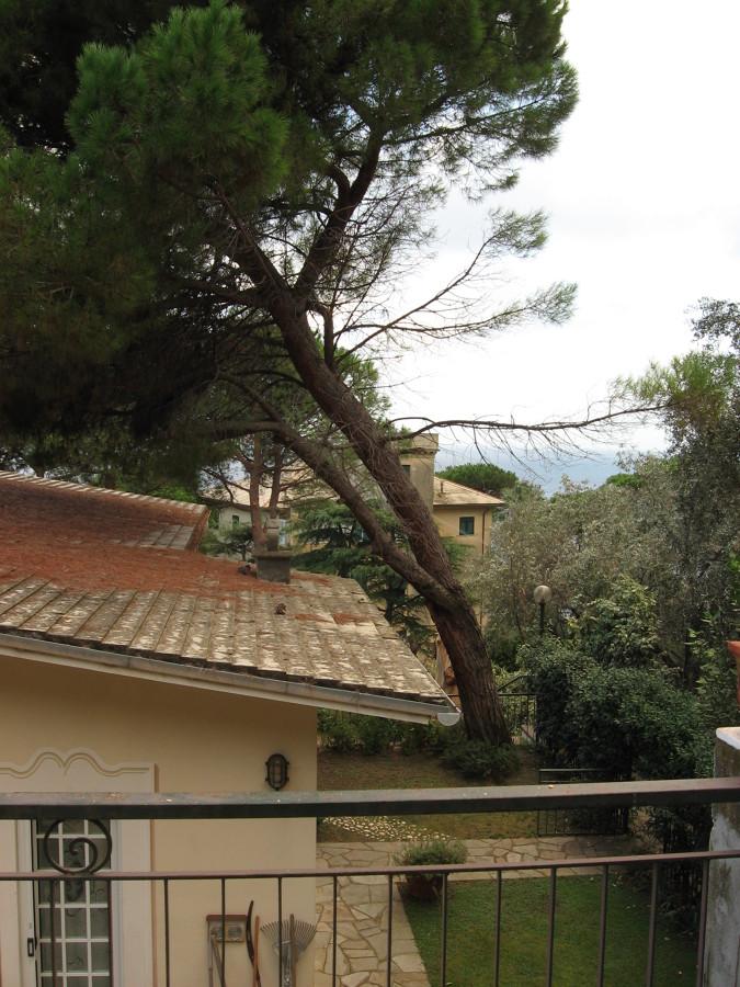 Progetto eliminazione di un albero di pino a rischio di for Piani della casa sul tetto
