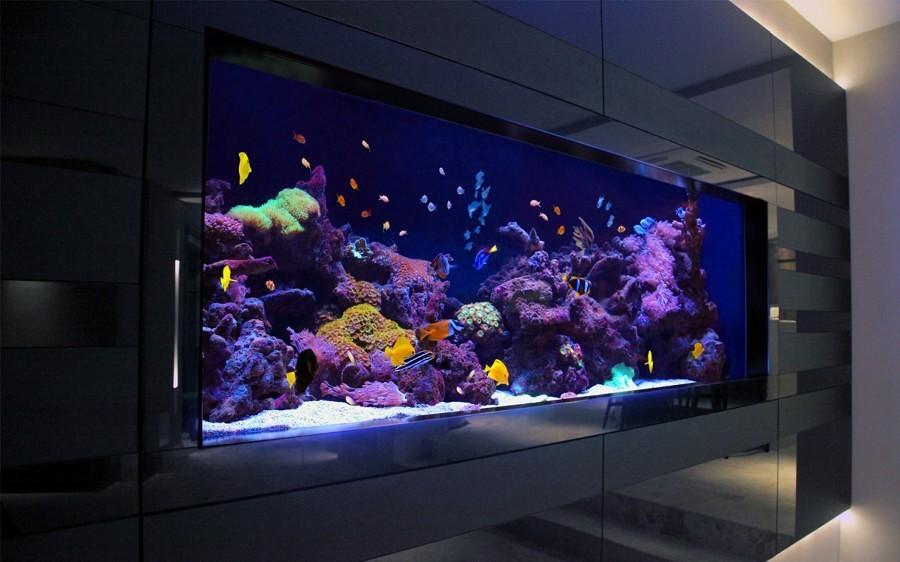 Sentiti come un pesce nell acqua con un acquario in casa for Arredamento acquario