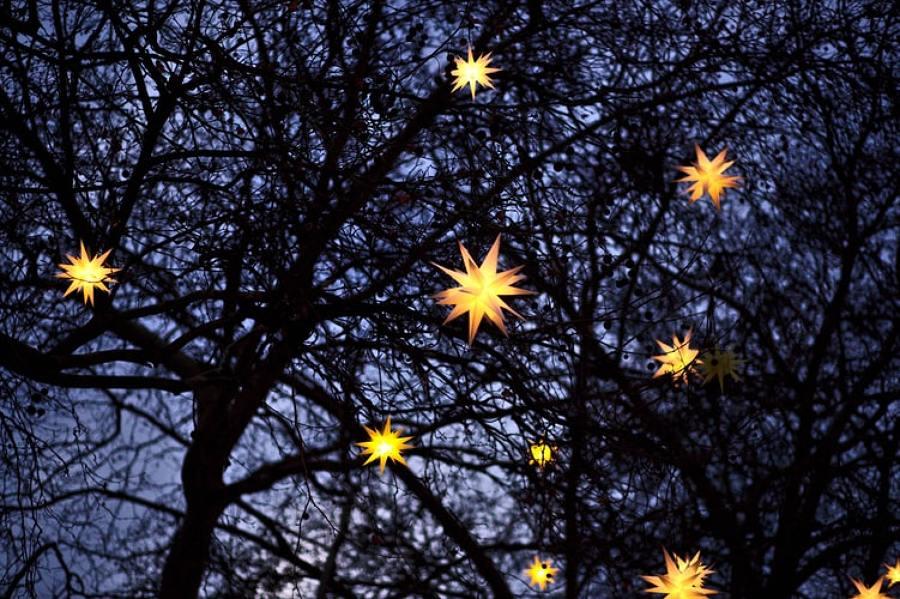 luci alberi