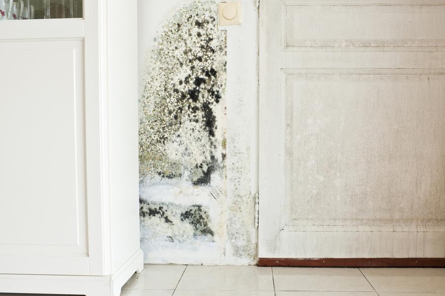 Cosa fare in caso di umidit macchie o muffa sui muri - Muffa sui muri esterni ...