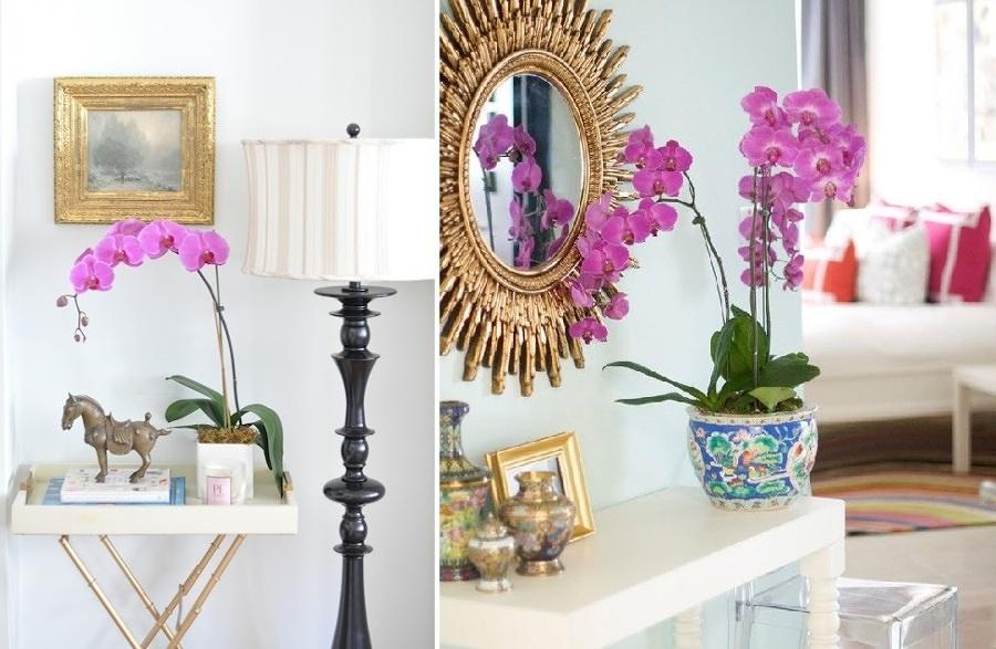 Orchidee per decorazioni eleganti e delicate idee for Orchidee in casa