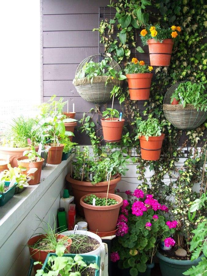 Foto orto verticale in balcone di marilisa dones 390972 for Giardino verticale balcone