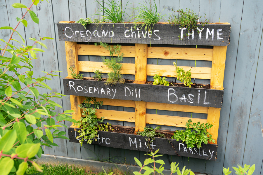 pallet con piante aromatiche per il giardino