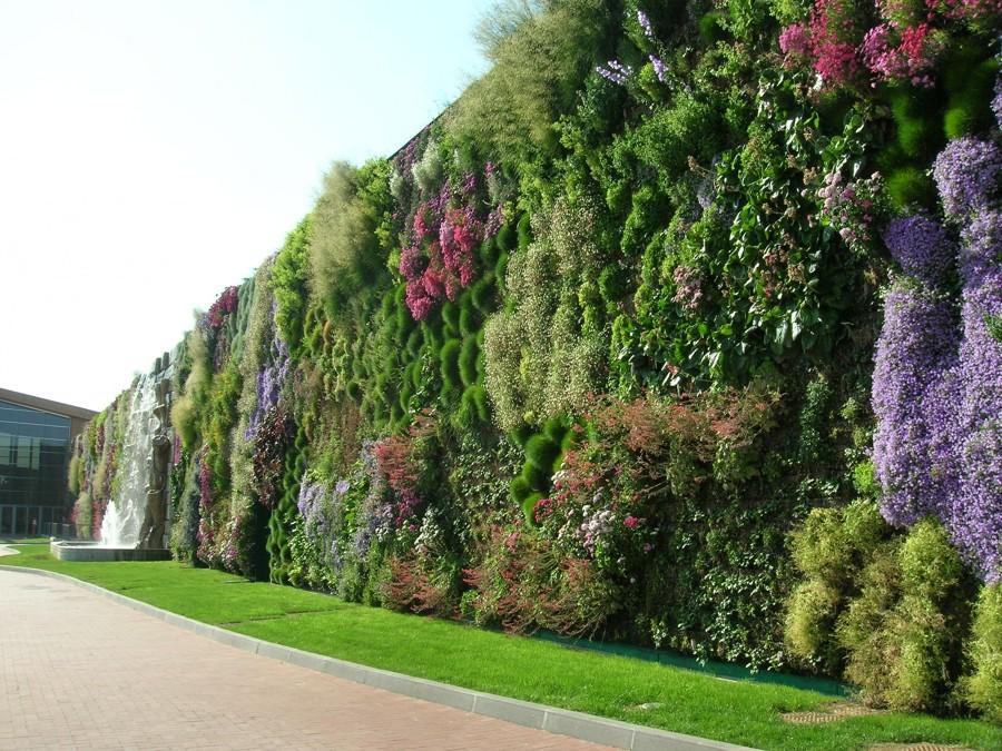 Foto parete verticale di rozzano fiordaliso di marilisa for Giardino verticale