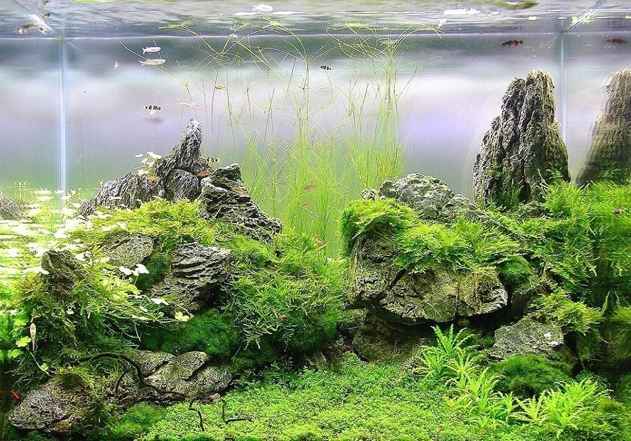 Il mare in casa consigli sulla manutenzione dell acquario for Piante acquario
