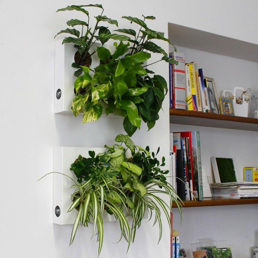 Crea il tuo giardino verticale idee giardinieri - Giardino verticale in casa ...