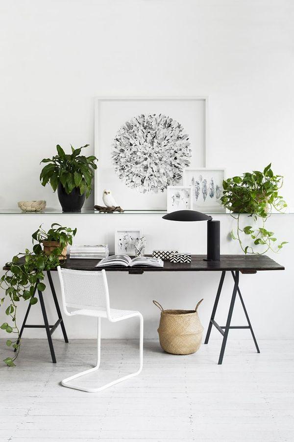 piante spazio di lavoro