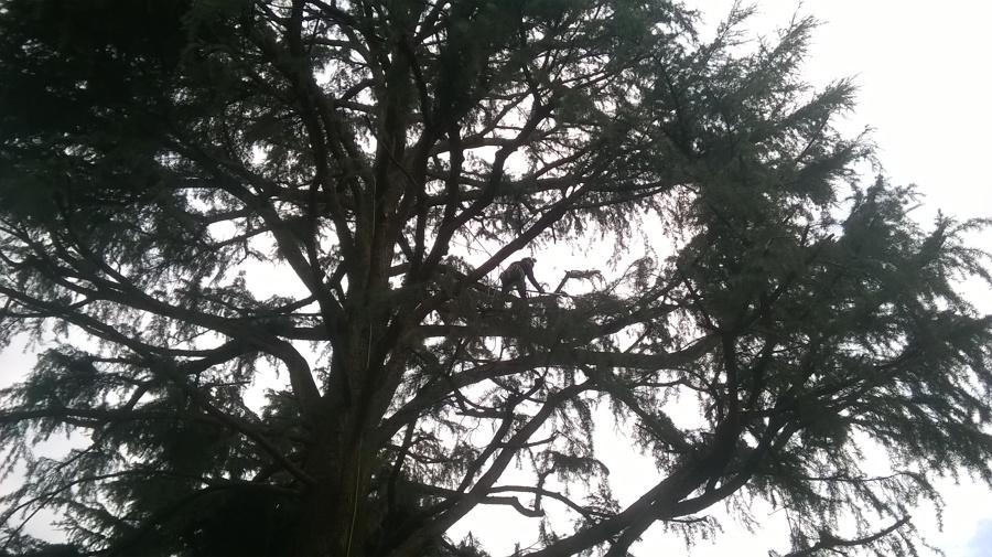 Progetto potatura in tree climbing a legnano mi idee for Idea casa legnano