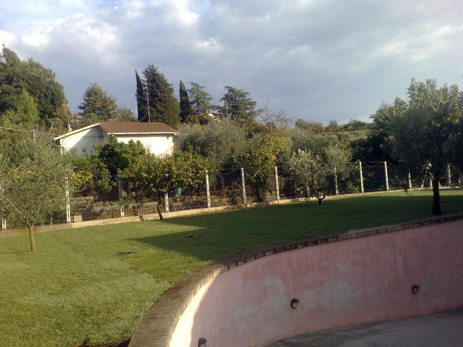 Foto prato a zolle de areeinverde 46357 habitissimo for Prato zolle