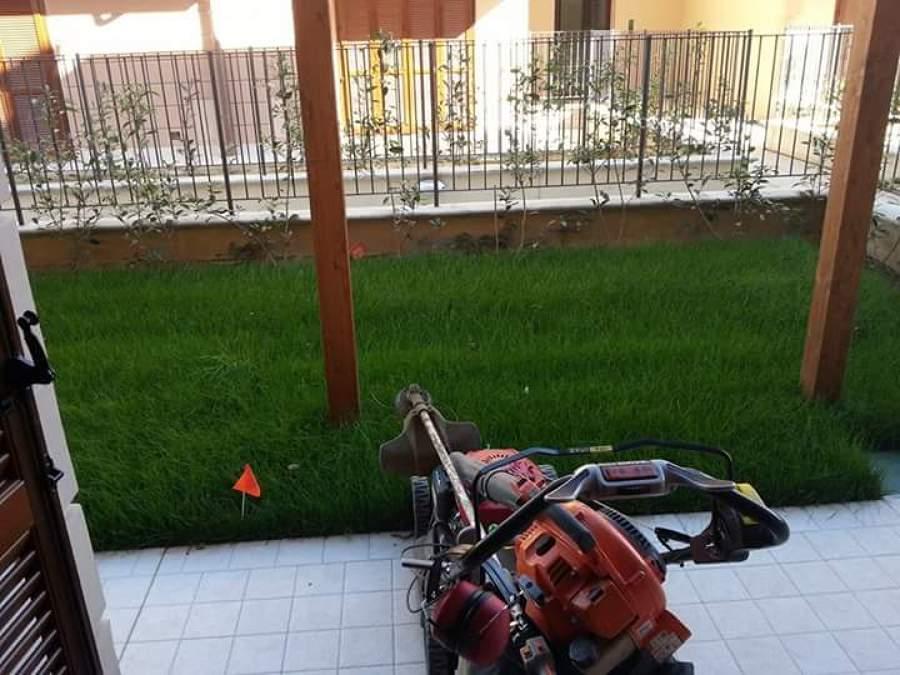 Progetto prato in zolle idee giardinieri for Prato zolle