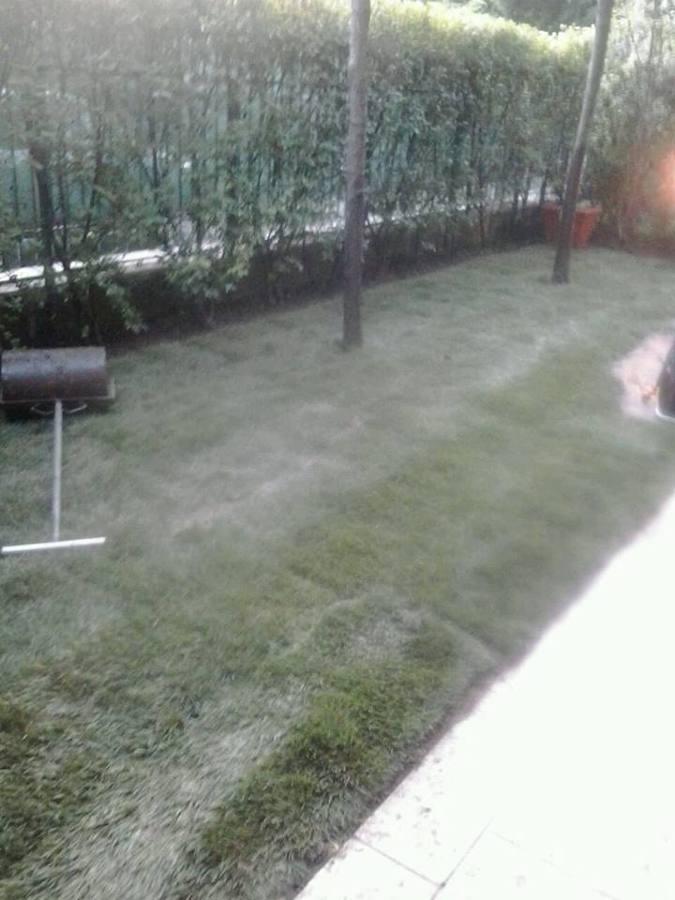 Progettazione tappeto erboso idee giardinieri for Tappeto erboso a rotoli prezzi