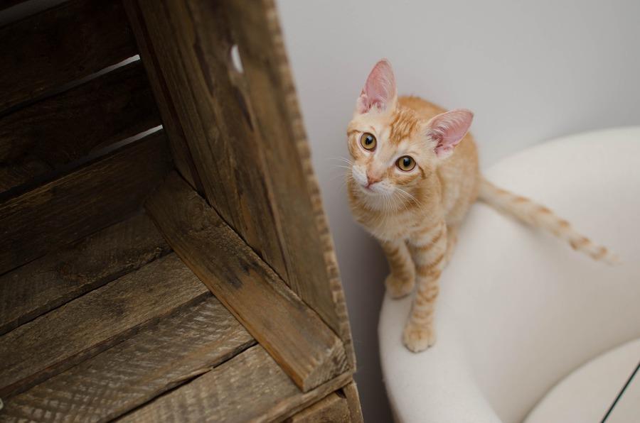 Trucchi per progettare la casa se hai un gatto