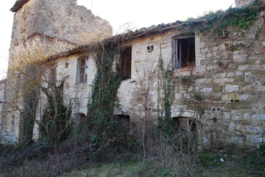 Vaccaria pre2