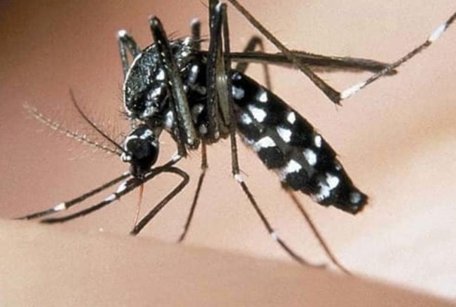 foto-zanzara-tigre-2-2.jpg_221268035.jpg