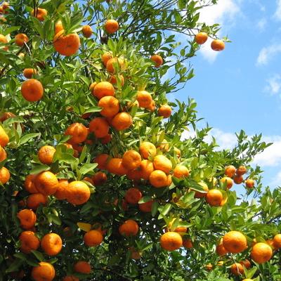 Alberi da frutto da seminare a settembre e ottobre