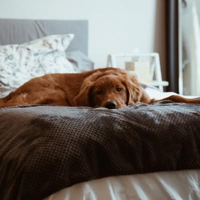 Non farti rubare il lenzuolo: come dormire al caldo d'inverno