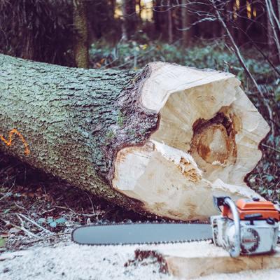 Fai da te: come tagliare un albero senza rischi