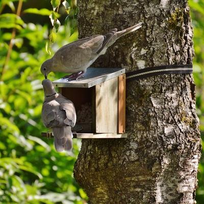 Come tenere lontani i piccioni dal balcone