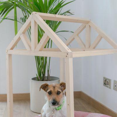 Come dovrebbe essere la tua casa se hai un cane o un gatto