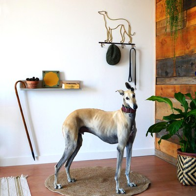 Idee per decorare la tua casa in presenza di cani