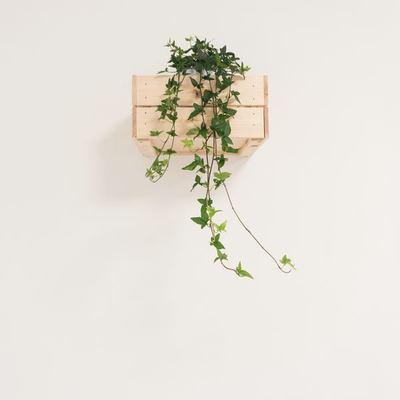 Come avere un piccolo giardino verticale