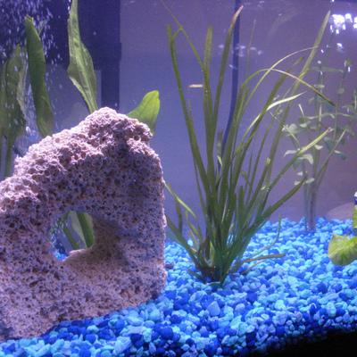 Idee e foto di arredare con acquari per ispirarti for Fondo acquario