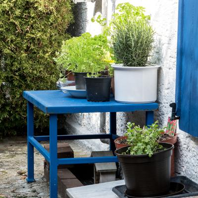 Anche tu puoi avere un orto aromatico in casa!