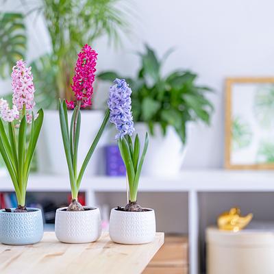 10 fiori bellissimi con cui decorare terrazze e balconi
