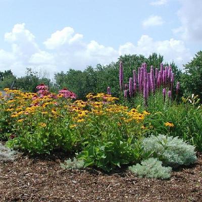Xerogiardineria: giardini senza una goccia d'acqua in più