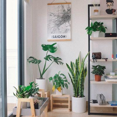 Idee per il tuo angolo verde