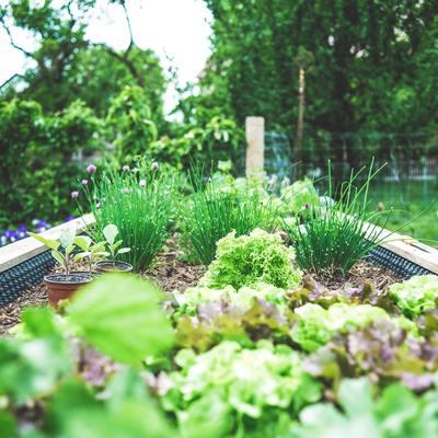 Dritte furbe per creare un piccolo orto in casa