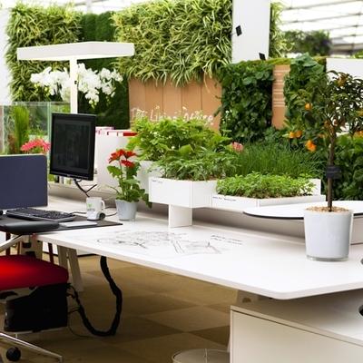 Idee e foto di ristrutturazioni uffici per ispirarti - Piante per ufficio ...