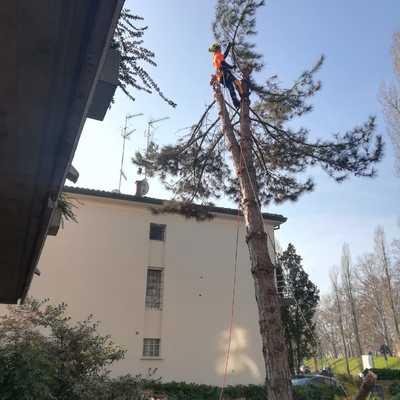 Abbattimento albero ad alto fusto a Ferrara