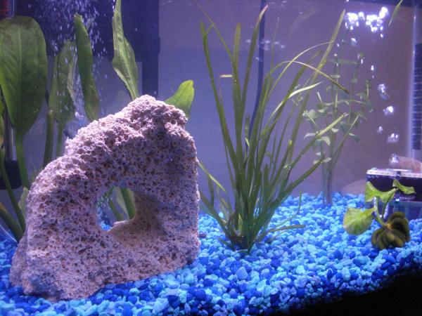 Foto fondo acquario di valeria del treste 304270 for Fondo acquario