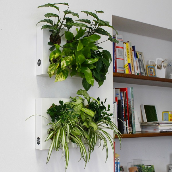 piante da interno giardino verticale