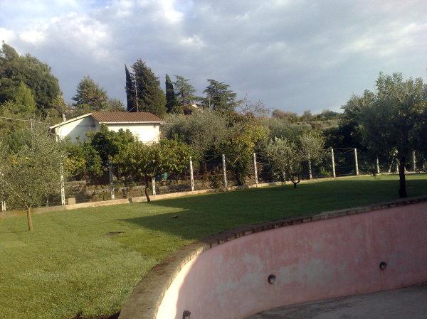 Foto prato a zolle di areeinverde 46357 habitissimo for Prato zolle