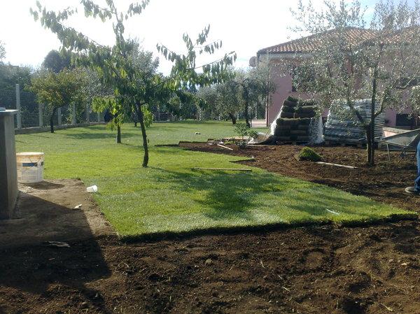 Foto tappeto erboso di areeinverde 46349 habitissimo for Tappeto erboso prezzi