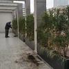 realizzazione mitigazione terrazzo