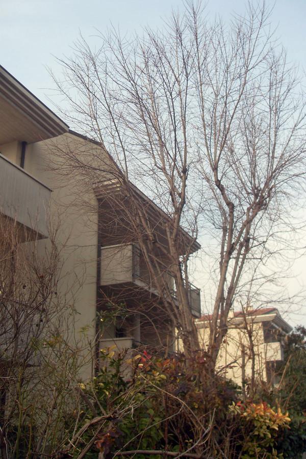 Potare acero caselle di sommacampagna verona habitissimo for Giardinieri verona