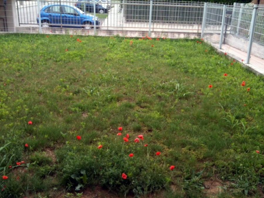 Sistemare e piantumare giardino gropello cairoli pavia - Sistemare il giardino ...