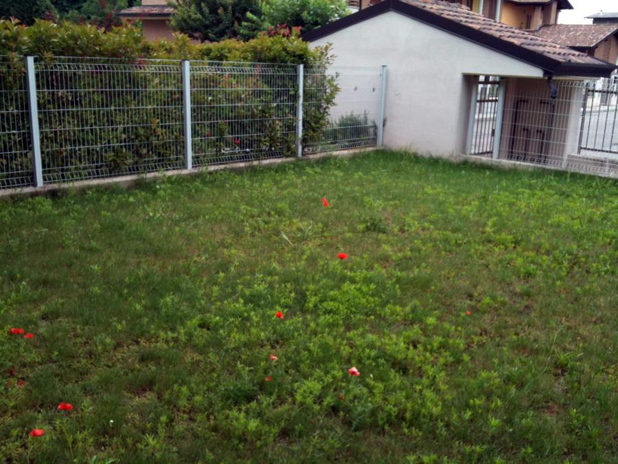 sistemare e piantumare giardino gropello cairoli pavia