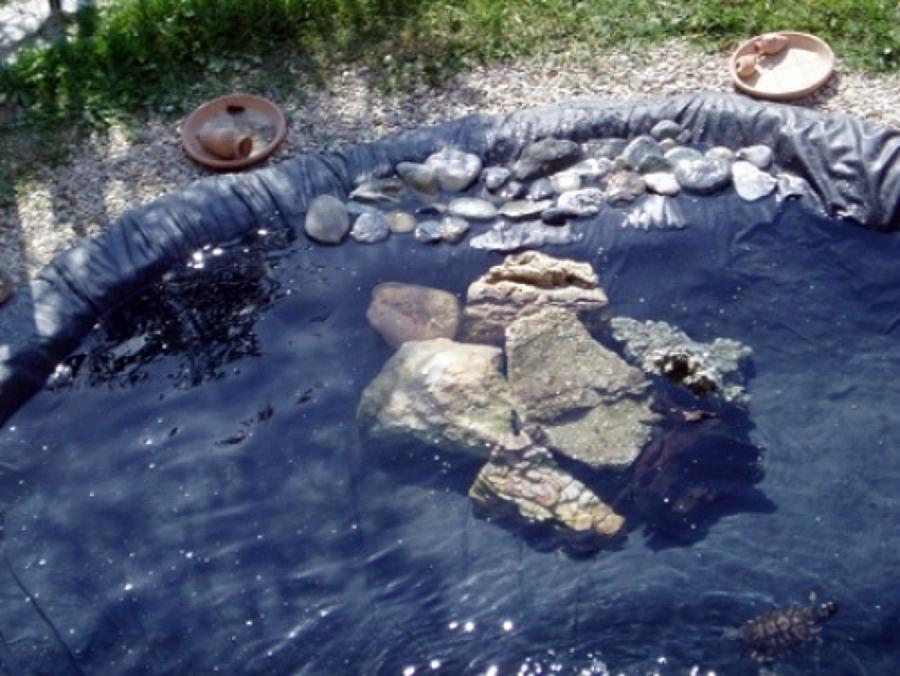 Costruire laghetto prefabbricato o in pvc vittorio for Laghetto tartarughe prezzo