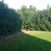 Realizzare e creare un vero giardino