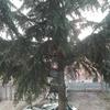 Abbattere albero