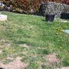 Giardino con manto erboso
